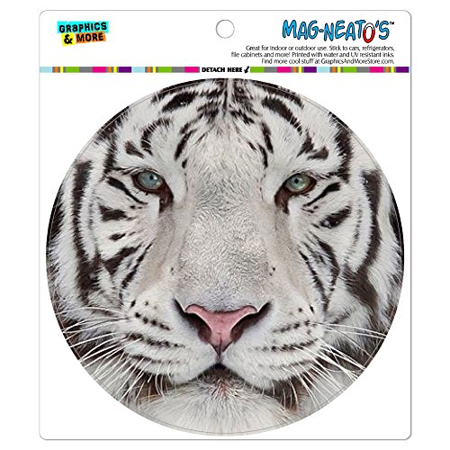White Bengal Tiger with Blue Eyes MAG-NEATO'S(TM) Automotive Car Refrigerator Locker Vinyl (Tiger Eyes Magnet)