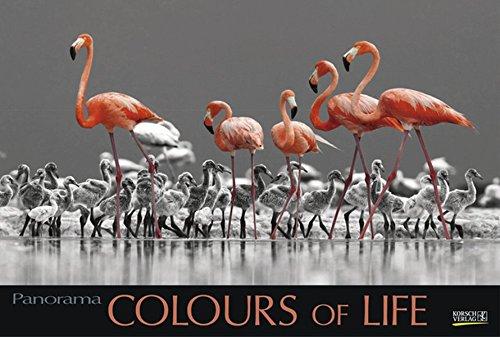 colours-of-life-2018-grosser-foto-wandkalender-mit-farbigen-schwarz-weiss-bildern-edler-schwarzer-hintergrund-und-foliendeckblatt-photoart-panorama-querformat-58x39-cm