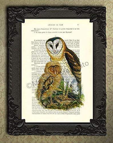 Amazon.com: Barn owl and owlet dictionary art print Mother ...