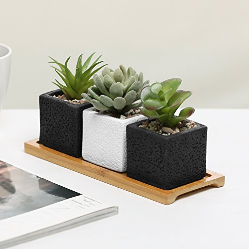 Set of 3 Mini Planters, Square Cement Plant Pots w/ Decorative Bamboo Wood Display Tray