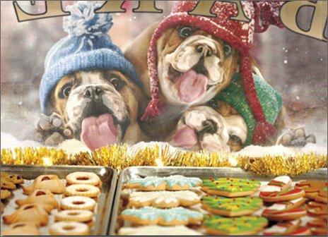 3 Christmas Dogs At Bakery Window - Box of 10 Avanti Funny Bulldog Christmas Cards