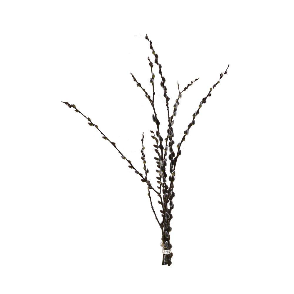 Ramille Palm Chaton: salweide branches–Chat en osier–Saule–Véritables branches de Pâques–Naturel Décoration (5branches, 80cm)