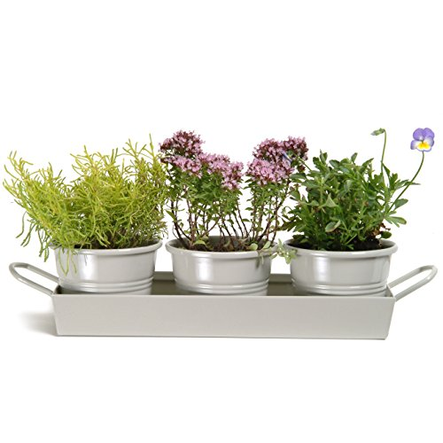 Windowsill Herb - CKB Ltd Set Of 3 Pots On Tray Metal Vintage Windowsill Planter Box For The Kitchen Grow Your Own Herbs For Cooking - Traditional Clay Coloured