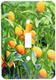 3dRose lsp_83504_1 Kumquat Fruit Tree, Agriculture Na01 Pri0002 Prisma Single Toggle Switch