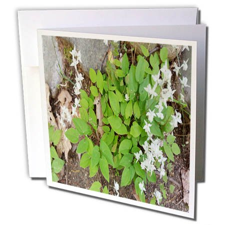 Flowers 5 Little (3dRose TDSwhite – Summer Seasonal Nature Photos - Surprise Little White Flowers - 1 Greeting Card with Envelope (gc_284572_5))
