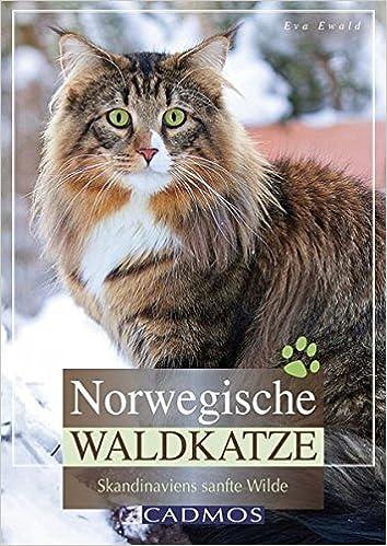 Norwegische Waldkatze Skandinaviens Sanfte Wilde Cadmos Katzenbuch
