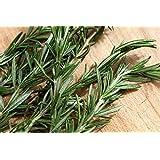 Rosemary, Herb Seed, Heirloom, Organic, 20+ Seeds, Healthy and Tasty Herb