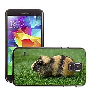 Cas Coq Case Cover // M00146773 Guinea Pig Casa Cavia Porcellus // Samsung Galaxy S5 S V SV i9600 (Not Fits S5 ACTIVE)