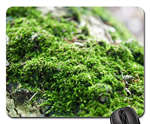 Mouse Pad - Moss Forest Nature Tree Green Natural Environment