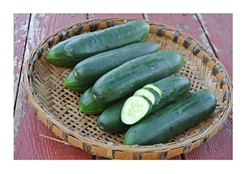 David's Garden Seeds Cucumber Slicing Poinsett 76 OU8009 (Green) 50 Non-GMO, Heirloom Seeds