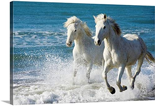 Camargue Horses Running on The Beach