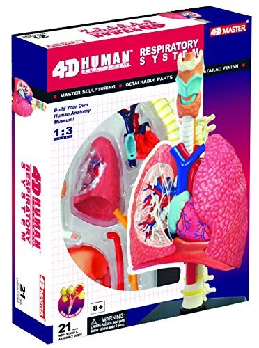 Respiratory System Anatomy Model – Build your Own!