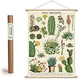 Vintage Poster Set mit Holzleisten (Rahmen) und Schnur zum Aufhängen, Motiv Kakteen, Kaktus