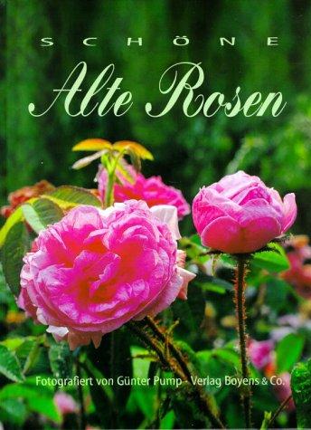 Schöne alte Rosen