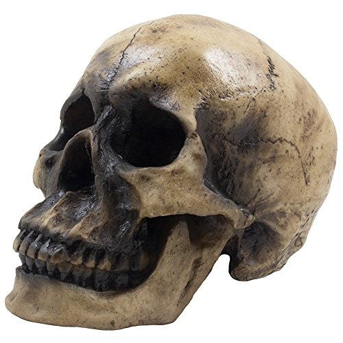 Life Size Human Skull - Realistic Faux Human Anatomy - Spooky Resin Halloween Home Decor - Table Top Skeleton Head Grinning (7