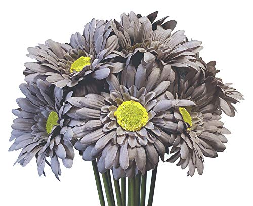 Gerbera Daisy Decorations - CraftMore Grey Colored Gerbera Daisy Stems 14 Inch Set of 12