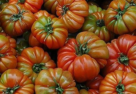 RWS 10 semillas de tomate RAF variedad Tamano Grande, de tomate de la herencia española, desde Andalucía, sur de España