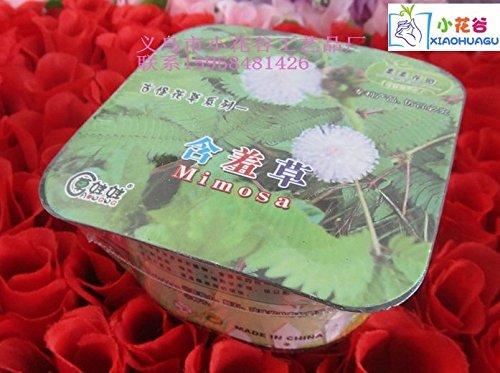 Office Mini bonsai flowers series of odd kiss garden Mimosa (hard pen packaging)