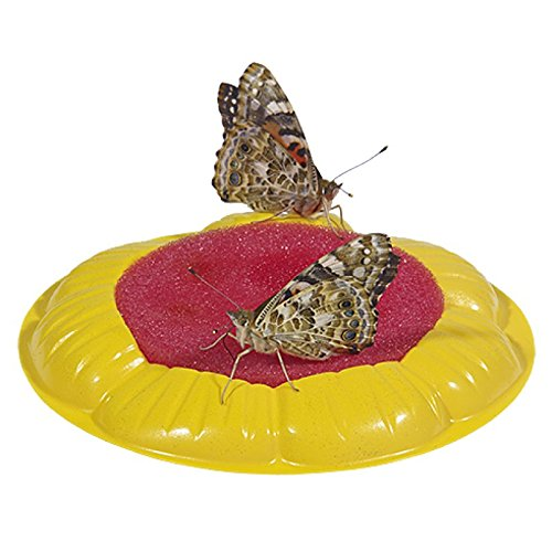Insect Lore Butterfly Garden Gift Set with Prepaid Voucher by Insect Lore (Image #5)