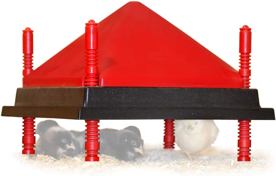 "RentACoop Chick Heating Plate Kit - Warms 20 Chicks - 22 Watts (12"" x 12"")"