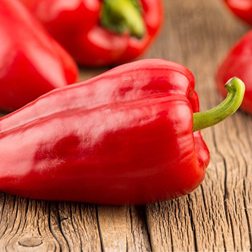 Mariachi Hybrid Hot Pepper Garden Seeds - 100 Seed - Non-GMO Vegetable Gardening Seeds (Mariachi Pepper Seeds)