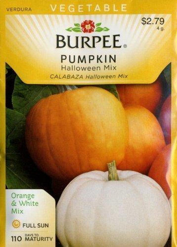 Burpee 68066 Pumpkin Halloween Mix Seed Packet by Burpee