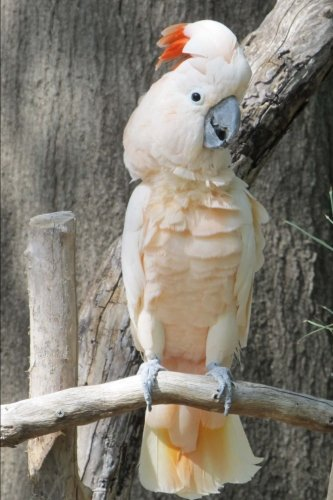 (White Cockatoo Bird Journal: 150 Page Lined Notebook/Diary)