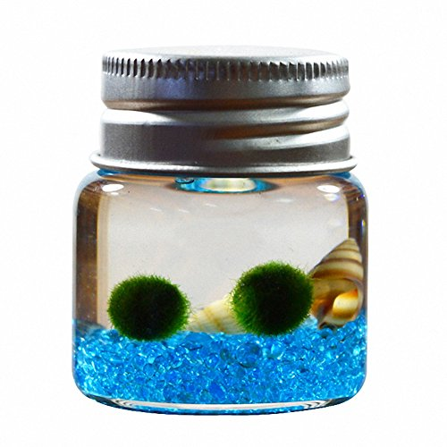 (OMEM Seaweed Balls Glass Bottles, Algae Moss Balls Glass Jar Aquarium Terrarium (Sky Blue))