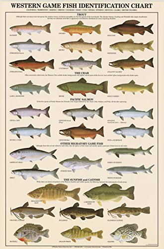 - Western Gamefish Fish Poster and Identification Chart