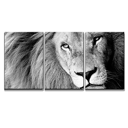 Close Up of Male Lion B W x3 Panels