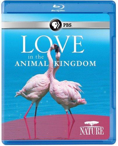 Blu-ray : Nature: Love In The Animal Kingdom (Blu-ray)