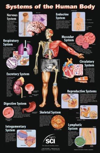 Neo Sci Sistemas del cuerpo humano Laminado Cartel, 23 \