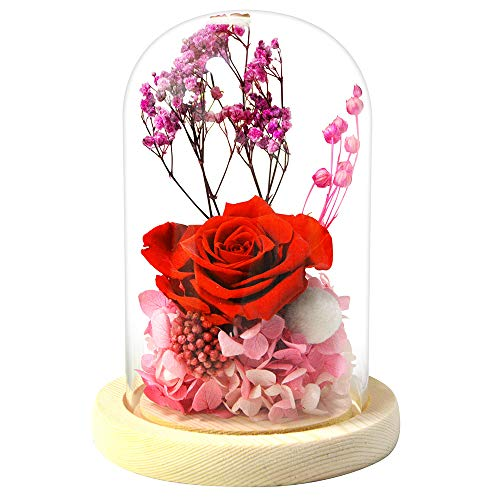Top 10 best preserved flower gift: Which is the best one in 2020?
