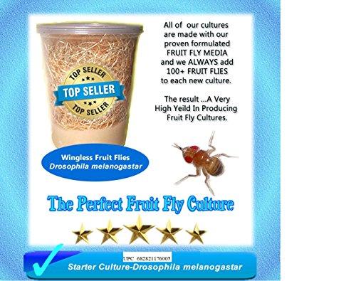 (Insectsales.com Fruit Fy Starter Culture (Wingless-Drosophila Melanogaster) Plus Free Fruit Fly Kit ... (Standard))