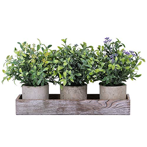 Set of 3 Mini Artificial Potted Plants Faux Seeded Boxwood Greenery Arrangement with Wood Planter Box for Indoor Office…