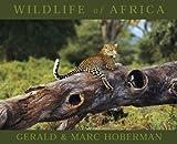 Wildlife of Africa, Gerald Hoberman, 1919734538