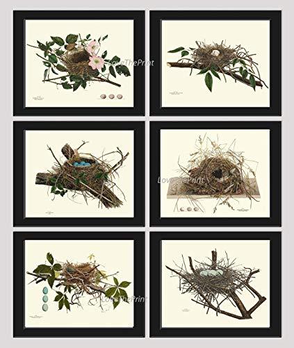 Bird Nest Egg Botanical Set of 6 Prints Unframed Antique Beautiful Tree Green Forest Birdwatcher Nature Home Room Decor Wall Art