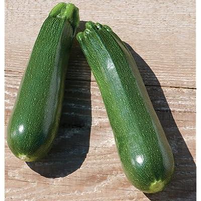 Partenon Zucchini Summer Squash 15 seeds : Garden & Outdoor