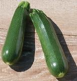 Partenon Zucchini Summer Squash 15 seeds