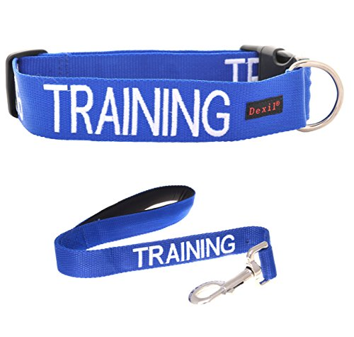TRAINING Blue Color Coded S-M L-XL Buckle Dog Collar and 2 4 6 Foot or Coupler Professional Leash Sets (Do Not Disturb) Prevents Accidents By Warning Others In Advance (L-XL Collar + Short 2 Foot Leash) (Ring Type 30' Iv)
