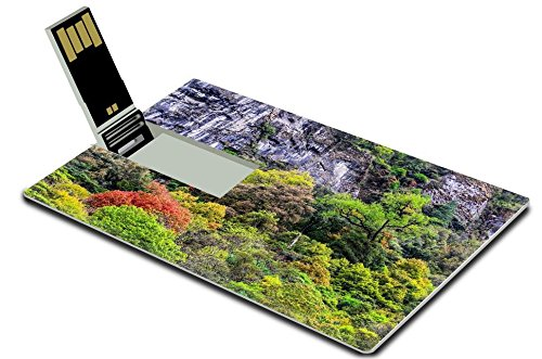 MSD 32GB USB Flash Drive 2.0 Memory Stick Credit Card Size Image ID 19752137 Colorful various forest trees foliage detail landscape view (Landscape Detail compare prices)