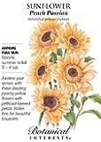 Sunflower Peach Passion Seeds 20 Seeds