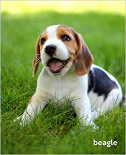 Beagle A Gift Journal For People Who Love Dogs Beagle Puppy Edition Volume 1 So Cute Puppies Amazon Co Uk Todayspetpublishing 9781494451707 Books