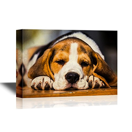 Dogs Breeds Young Sleepy Beagle Puppy Lying on The Wood