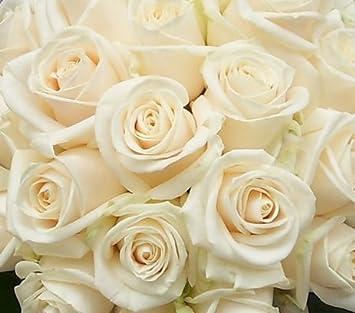 Amazon fresh white roses 50 cm long 20 50100200 100 fresh white roses 50 cm long 20quot 50100 mightylinksfo