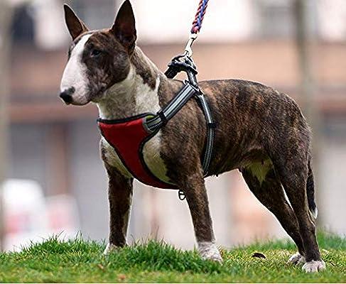 Arnés para Perro,Correa para Mascotas Apurada A Prueba De ...
