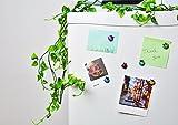 BelleDeco Ladybug Kitchen Magnets Refrigerator