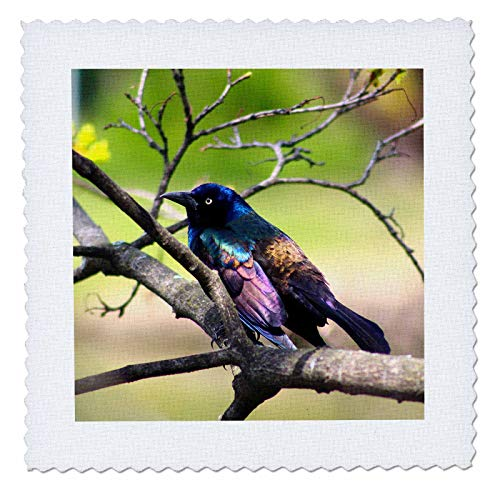 3dRose Stamp City - Birds - Photograph of a Colorful Common Grackle Sitting Among The Branches. - 10x10 inch Quilt Square (qs_291284_1)
