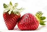 Home Comforts Laminated Poster Strawberry Fresh Red Fruit Berry Healthy Food Poster
