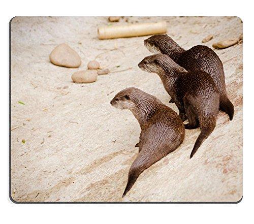 luxlady-mousepad-asian-small-otters-image-19508417